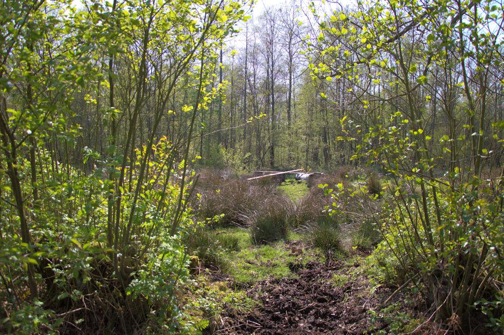 Prachtige wandeling in het natuurgebied de Rammelaars te Ham.