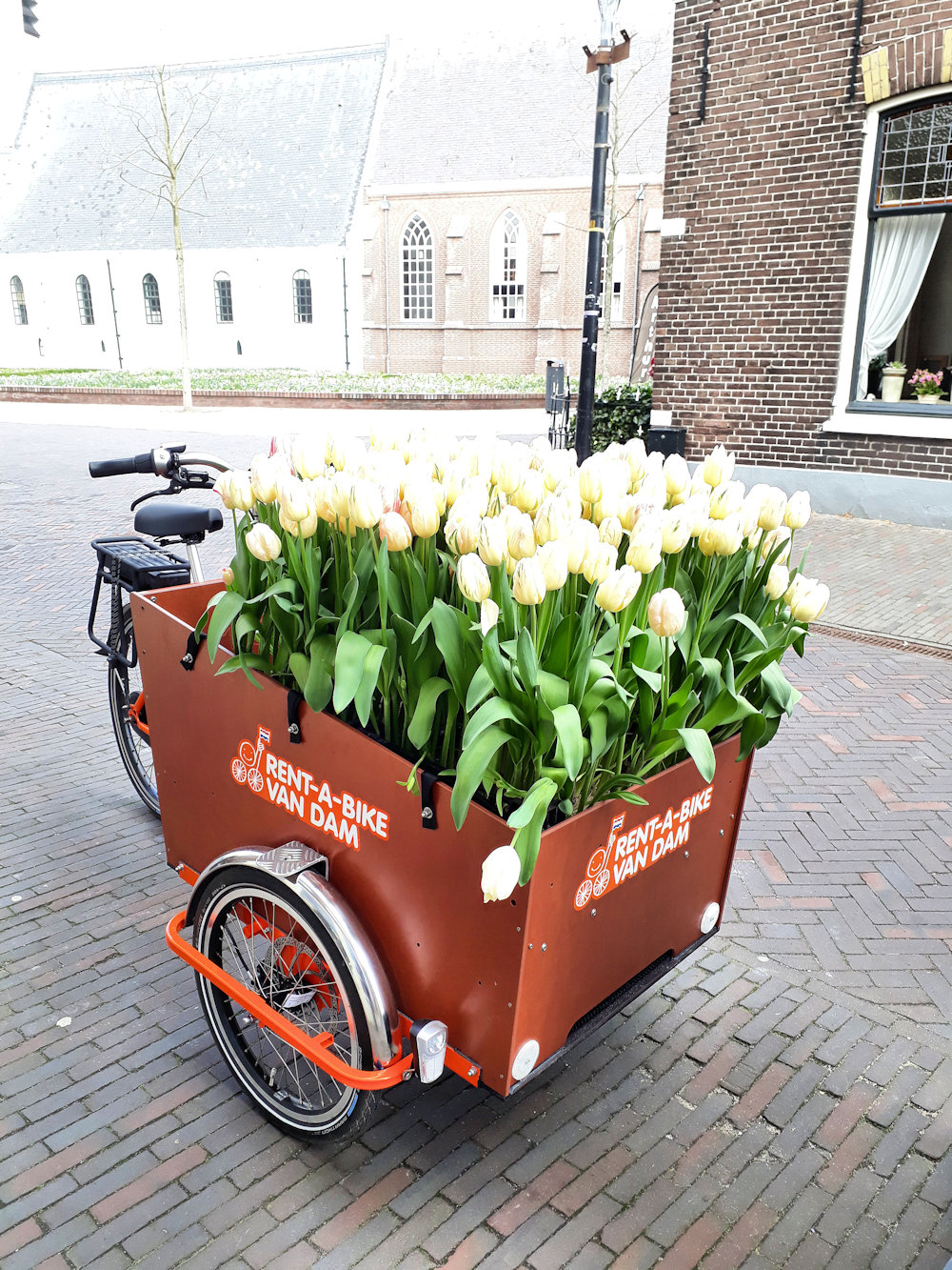 bollenstreek in Nederland