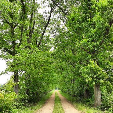 De Rammelaars een prachtig natuurgebied dat van verrassingen houdt.