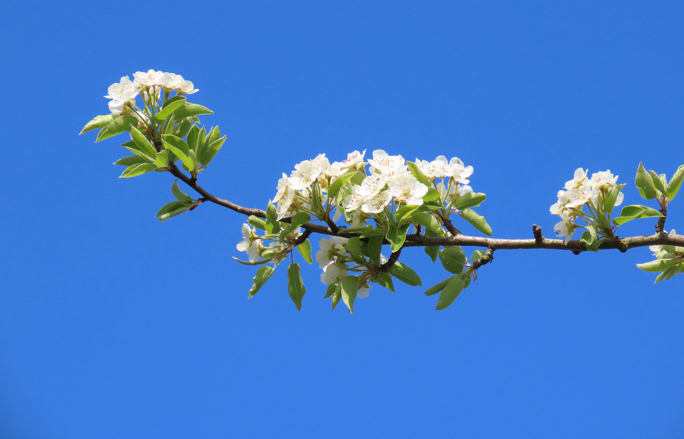 lentewandeling